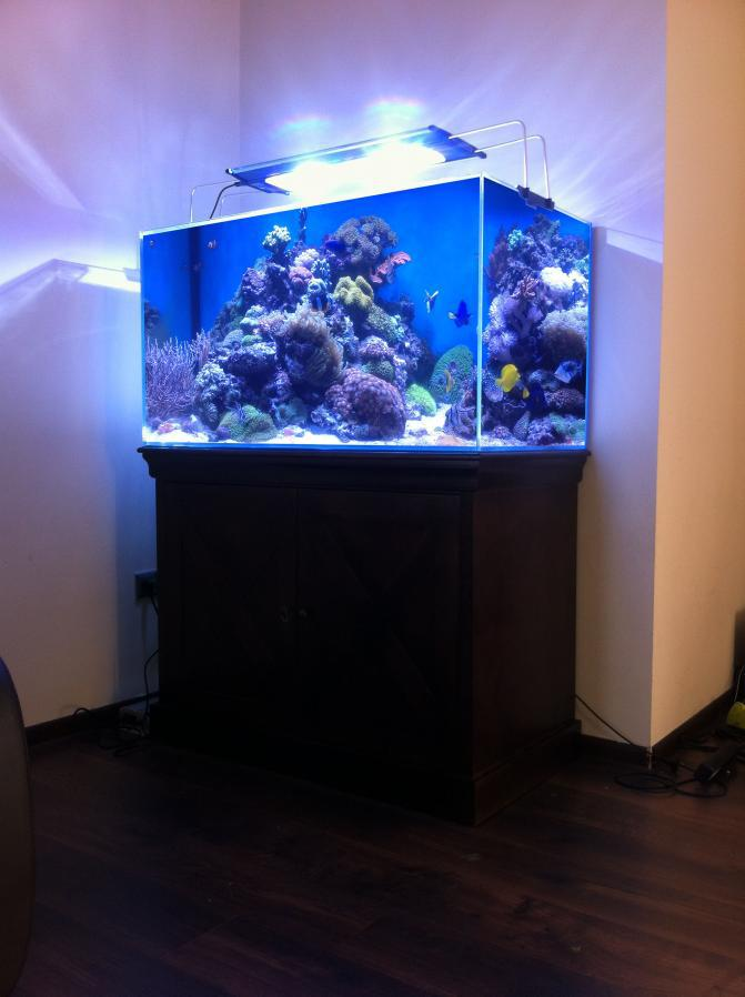 pro_reef_aquarium_imagelarge
